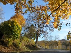 Laubbäume am Weg